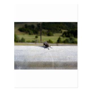 Fly On A Rail Postcard