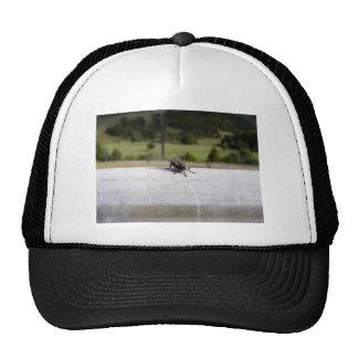 Fly On A Rail Trucker Hat