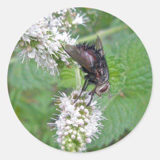 Fly on Mint (Tachinini  juriniopsis) Series Classic Round Sticker