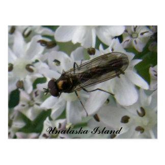 Fly on Putchki Blossoms, Unalask Island Postcard