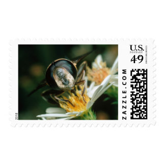 Fly On Top Of Flower. Pretoria District Postage