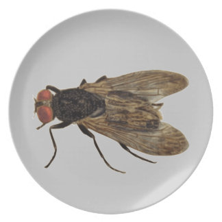 Fly Plate