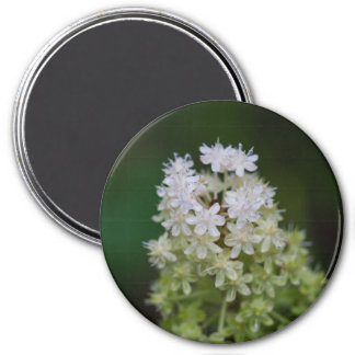 Fly Poison White Wildflower Round Magnet