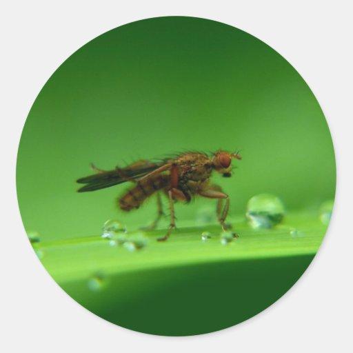 Fly Round Sticker