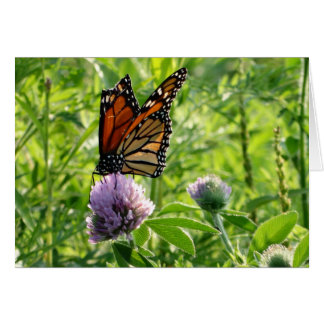 Fly With A Broken Wing, Monach Butterfly Card