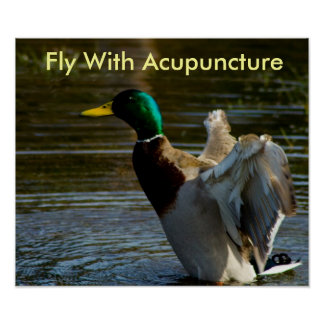 Fly With Acupuncture Print