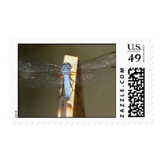 Fly With Me Postage