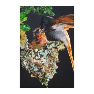 Flycatcher africano del paraíso impresion en lona