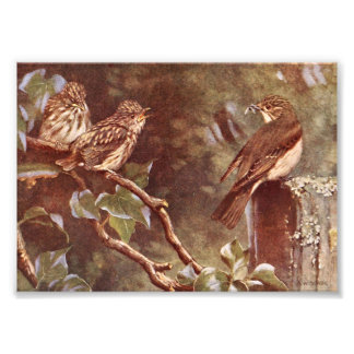 Flycatcher and Young Photo Print