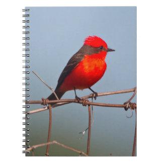 Flycatcher bermellón (Pyrocephalus Rubinus) Spiral Notebooks