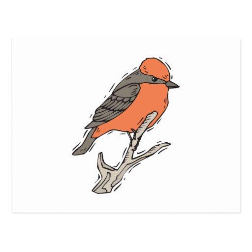 flycatcher bermellón tarjeta postal