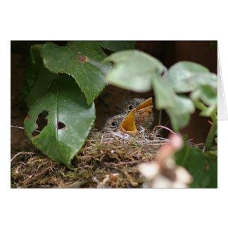 Flycatcher chicks greeting card