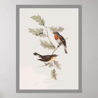 Flycatcher de pecho rojo poster