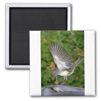 Flycatcher Grande-con cresta Iman De Frigorífico