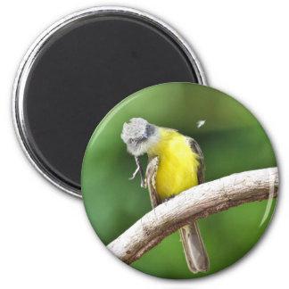 Flycatcher Gris-coronado Imán Redondo 5 Cm