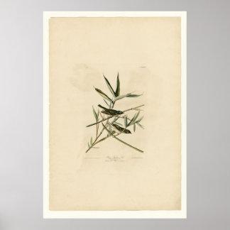 Flycatcher o un especie de ave solitario impresiones