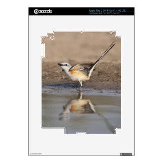 Flycatcher Scissor-atado reflejado en la charca iPad 3 Pegatina Skin