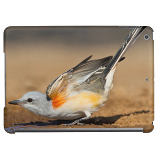Flycatcher Scissor-Atado (Tyrannus Forficatus)