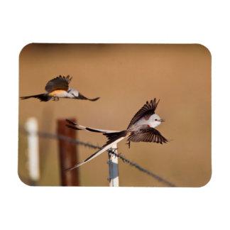 Flycatchers Scissor-Atados (Tyrannus Forficatus) Imanes Flexibles