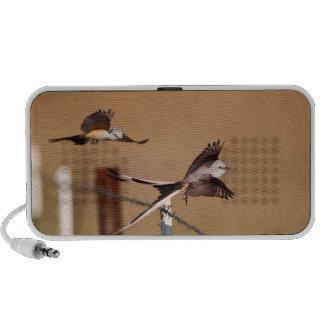 Flycatchers Scissor-Atados (Tyrannus Forficatus) iPod Altavoz