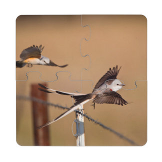 Flycatchers Scissor-Atados (Tyrannus Forficatus) Posavasos De Puzzle