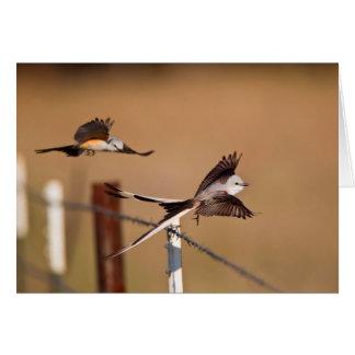 Flycatchers Scissor-Atados (Tyrannus Forficatus) Tarjeta De Felicitación