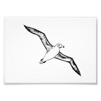 Flying Albatross Illustration Photo Art