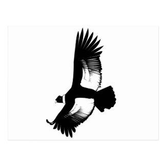 Flying Andean Condor Postcard