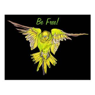 Flying Australian Budgie Bird Parakeet Postcard