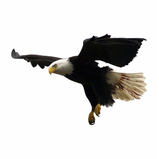 FLYING BALD EAGLE(sculpted) Magnet