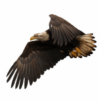 FLYING BALD EAGLE sculpted Wildlife Gift Cutout