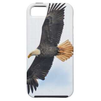 Flying Bald Eagle Wildlife Photograph iPhone 5 Cases