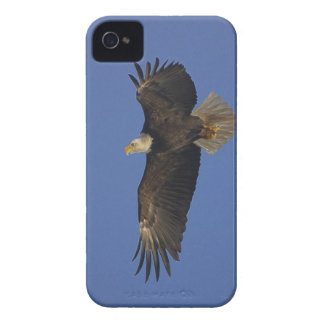 Flying Bald Eagle Wildlife-supporter Art iPhone 4 Cover