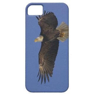 Flying Bald Eagle Wildlife-supporter Art iPhone SE/5/5s Case