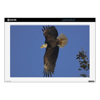 Flying Bald Eagle Wildlife-supporter Art Laptop Decals