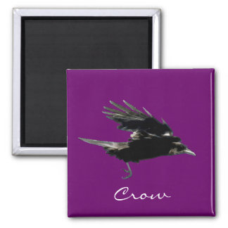 Flying Black Crow Birdlover's Magnet