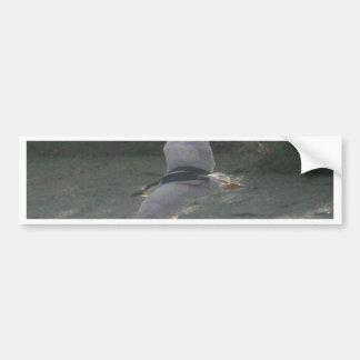 Flying Black-Crowned Night-Heron Bumper Sticker