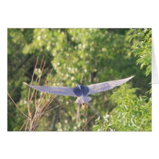 Flying Black-Crowned Night-Heron Card