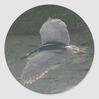 Flying Black-Crowned Night-Heron Classic Round Sticker