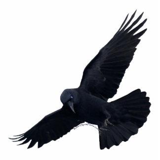 FLYING BLACK RAVEN (sculpted) Magnet