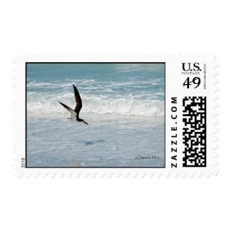 Flying Black Skimmer Postage