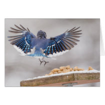 Flying Blue Jay Bird Greeting Card