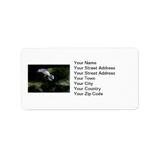 Flying Blue Jay Personalized Address Labels