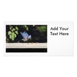 Flying Blue Jay Photo Photo Greeting Card