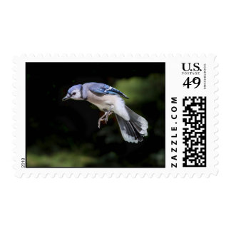 Flying Blue Jay Stamp