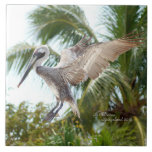 """Flying Brown Pelican Landing Tile<br><div class=""""desc"""">A Tile with a photograph of a beautiful Pelican flying.  Flying Pelican was photographed in South Florida.    You can use these Tiles to put in your bathroom,  kitchen or around an in-ground pool,  etc.  This photograph of a flying Pelican is Copyrighted by me,  Christina Spiegeland. Copyright 2016.</div>"""