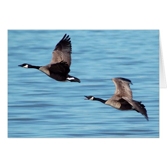 Flying Canada Geese Card