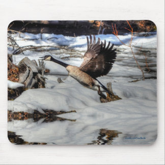 Flying Canada Goose, Pond & Snow 2 Wildlife Photo Mouse Pad