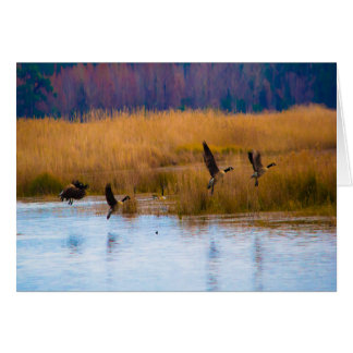 Flying Canadian Geese Card
