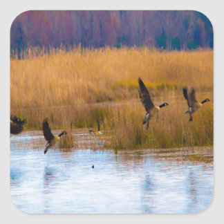 Flying Canadian Geese Square Sticker